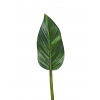 Лист Колоказии искусственный зеленый 47 см MDP