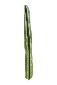 Стебель кактуса сан педро искусственный h120 см