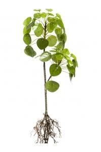 Пилея куст с корнями искусственная h57 см