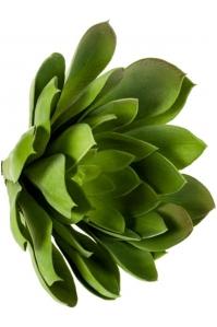 Эхеверия миранда зелёная искусственная h30 см