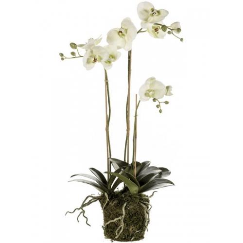 Орхидея фаленопсис лайм с землёй и мхом искусственная h75 см