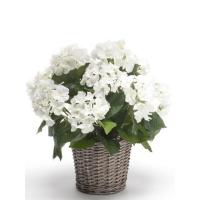 Гортензия белая в плетёной корзине искусственная d20 см