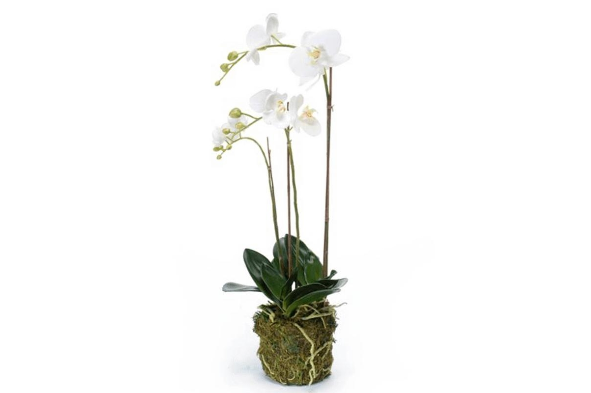 Орхидея фаленопсис белая с землёй и мхом искусственная h70 см