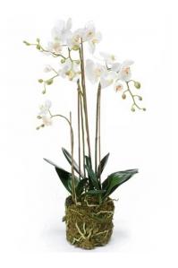 Орхидея фаленопсис белая с землёй и мхом искусственная h80 см