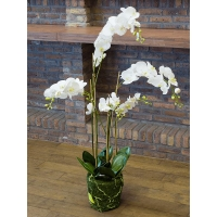 Орхидея фаленопсис белая с землёй и мхом искусственная h130 см
