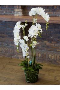Орхидея фаленопсис белая с землёй и мхом искусственная h145 см
