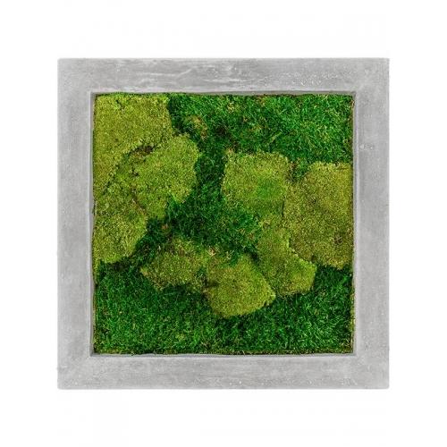 Картина из стабилизированного мха raw grey 50% ball- and 50% flat moss l50 w50 h5 см