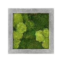 Картина из стабилизированного мха raw grey 30% ball- and 70% flat moss l50 w50 h5 см