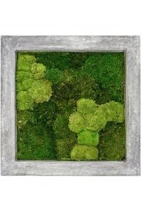 Картина из стабилизированного мха raw grey 30% ball- and 70% flat moss l70 w70 h5 см