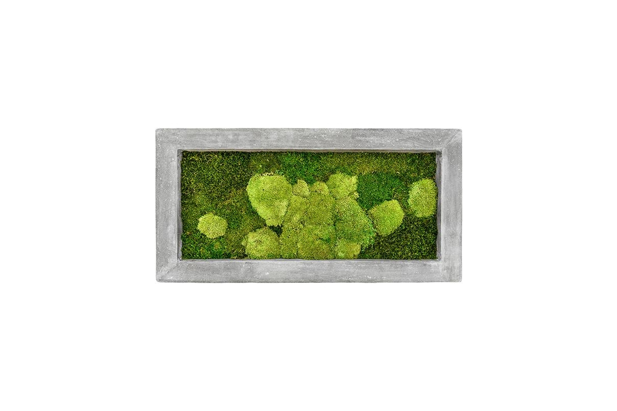 Картина из стабилизированного мха raw grey 50% ball- and 50% flat moss l100 w50 h5 см