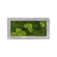 Картина из стабилизированного мха raw grey 30% ball- and 70% flat moss l100 w50 h5 см