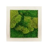 Картина из стабилизированного мха natural 50% ball- and 50% flat moss l50 w50 h5 см