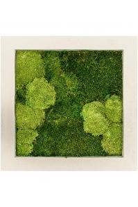 Картина из стабилизированного мха natural 30% ball- and 70% flat moss l50 w50 h5 см