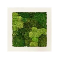 Картина из стабилизированного мха natural 30% ball- and 70% flat moss l70 w70 h5 см