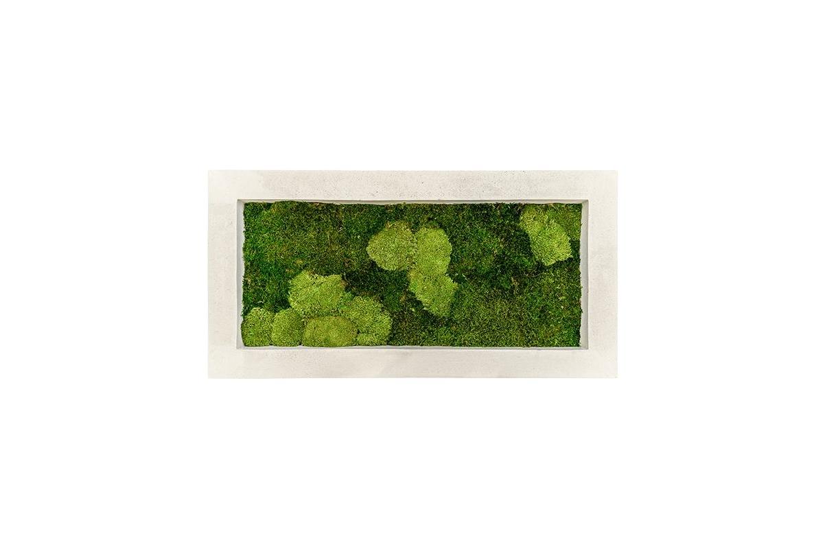 Картина из стабилизированного мха natural 30% ball- and 70% flat moss l100 w50 h5 см