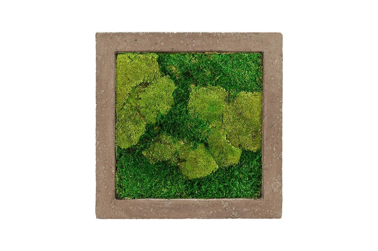 Картина из стабилизированного мха rock 50% ball- and 50% flat moss l50 w50 h5 см