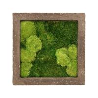 Картина из стабилизированного мха rock 30% ball- and 70% flat moss l50 w50 h5 см