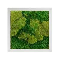 Картина из стабилизированного мха superline 50% ball- and 50% flat moss l50 w50 h5 см