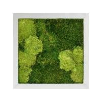 Картина из стабилизированного мха superline 30% ball- and 70% flat moss l50 w50 h5 см