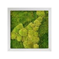 Картина из стабилизированного мха superline 50% ball- and 50% flat moss l70 w70 h5 см