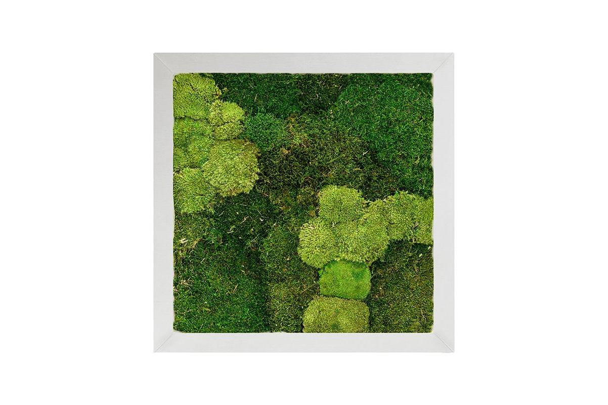 Картина из стабилизированного мха superline 30% ball- and 70% flat moss l70 w70 h5 см