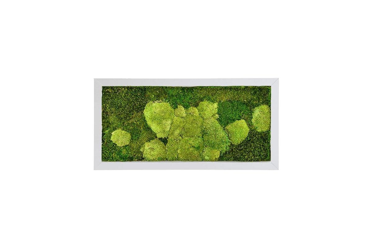 Картина из стабилизированного мха superline 50% ball- and 50% flat moss l100 w50 h5 см