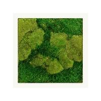 Картина из стабилизированного мха stiel ral 9010 mat 50% ball- and 50% flat moss l50 w50 h5 см