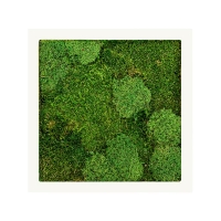 Картина из стабилизированного мха stiel ral 9010 mat 30% ball- and 70% flat moss l50 w50 h5 см