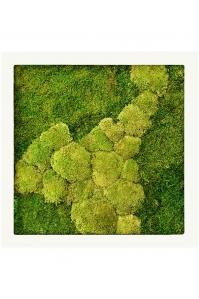 Картина из стабилизированного мха stiel ral 9010 mat 50% ball- and 50% flat moss l70 w70 h5 см