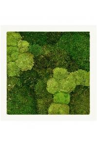Картина из стабилизированного мха stiel ral 9010 mat 30% ball- and 70% flat moss l70 w70 h5 см