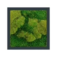 Картина из стабилизированного мха stiel ral 7016 mat 50% ball- and 50% flat moss l50 w50 h5 см