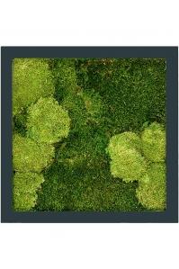 Картина из стабилизированного мха stiel ral 7016 mat 30% ball- and 70% flat moss l50 w50 h5 см