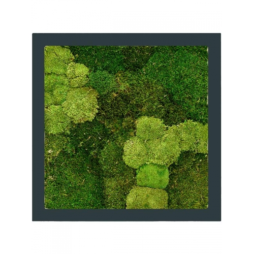 Картина из стабилизированного мха stiel ral 7016 mat 30% ball- and 70% flat moss l70 w70 h5 см