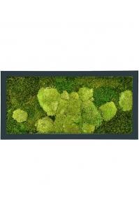 Картина из стабилизированного мха stiel ral 7016 mat 50% ball- and 50% flat moss l100 w50 h5 см