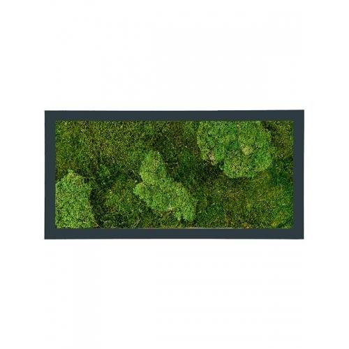 Картина из стабилизированного мха stiel ral 7016 mat 30% ball- and 70% flat moss l100 w50 h5 см