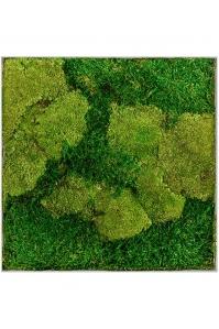 Картина из стабилизированного мха superline l 50% ball- and 50% flat moss l50 w50 h5 см
