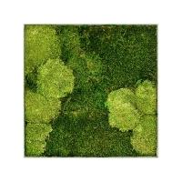 Картина из стабилизированного мха superline l 30% ball- and 70% flat moss l50 w50 h5 см