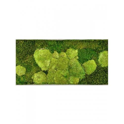 Картина из стабилизированного мха superline l 50% ball- and 50% flat moss l100 w50 h5 см
