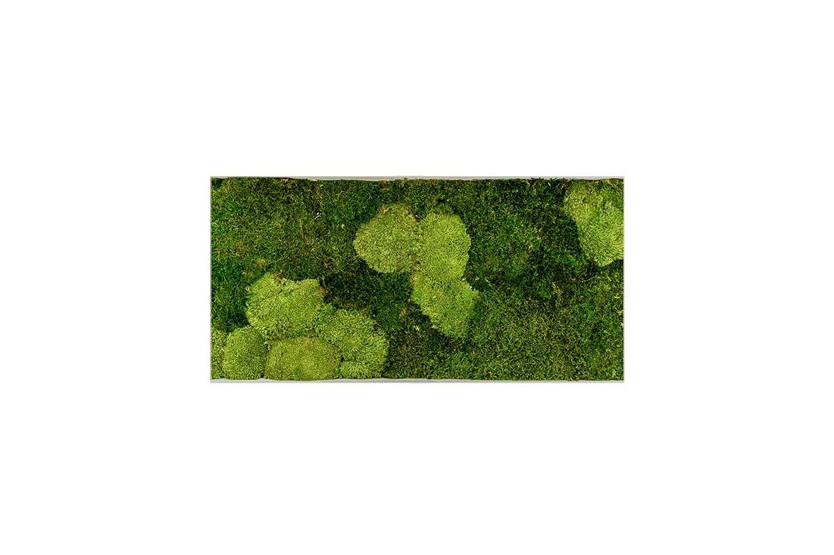 Картина из стабилизированного мха superline l 30% ball- and 70% flat moss l100 w50 h5 см