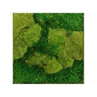 Картина из стабилизированного мха stiel l ral 9010 50% ball- and 50% flat moss l50 w50 h5 см