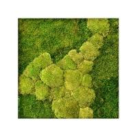Картина из стабилизированного мха stiel l ral 9010 50% ball- and 50% flat moss l70 w70 h5 см