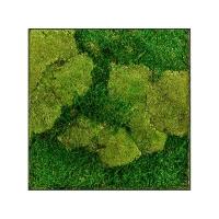 Картина из стабилизированного мха stiel l ral 7016 50% ball- and 50% flat moss l50 w50 h5 см