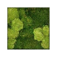 Картина из стабилизированного мха stiel l ral 7016 30% ball- and 70% flat moss l50 w50 h5 см