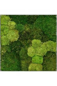 Картина из стабилизированного мха stiel l ral 7016 30% ball- and 70% flat moss l70 w70 h5 см