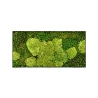 Картина из стабилизированного мха stiel l ral 7016 50% ball- and 50% flat moss l100 w50 h5 см