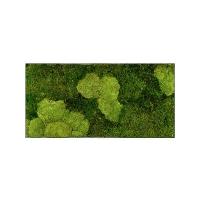 Картина из стабилизированного мха stiel l ral 7016 30% ball- and 70% flat moss l100 w50 h5 см