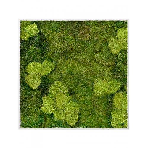 Картина из стабилизированного мха aluminum 30% ball moss (natural) and 70% flat moss l120 w120 h6 см