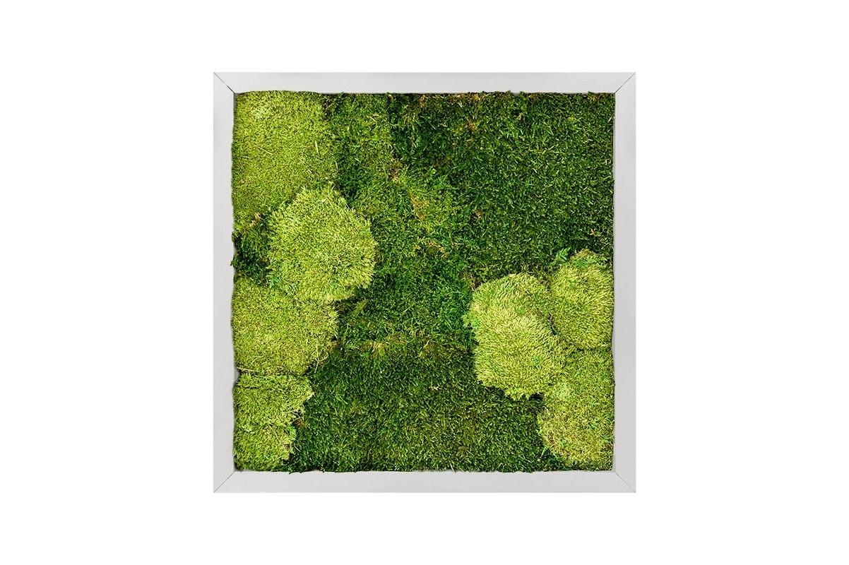 Картина из стабилизированного мха aluminum 30% ball moss (natural) and 70% flat moss l40 w40 h6 см