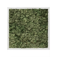 Картина из стабилизированного мха (рама aluminum) l50 w50 h6 см