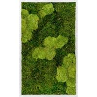 Картина из стабилизированного мха aluminum 30% ball moss (natural) and 70% flat moss l60 w100 h6 см